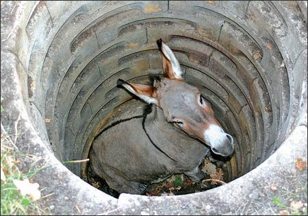 Poor Donkey