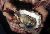 Drakes Bay Oysters