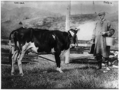 Calvin-Coolidge-cow-e1359473649623