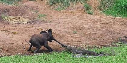 elephants-story03