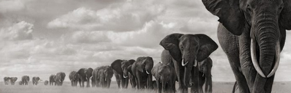 Organise-page-elephants-travelling-in-line
