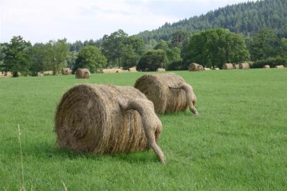 strawmen