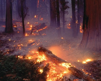 sequoia-forest-fire-505503-sw