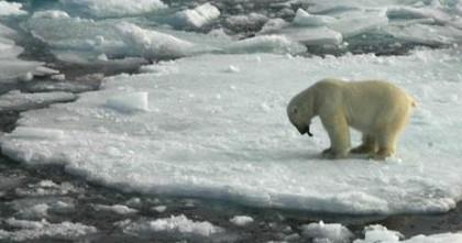 110803-polar bear-h.grid-6x2