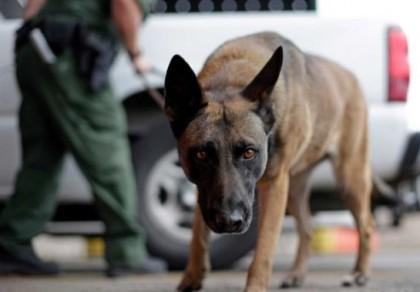dog-550x415