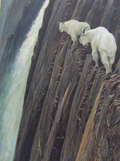 goats-sheer-mountain