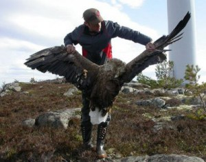 dead_white-tailed_eagle-5001-e1416108699316