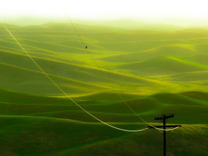 green-7 by anild sud courtesy eye