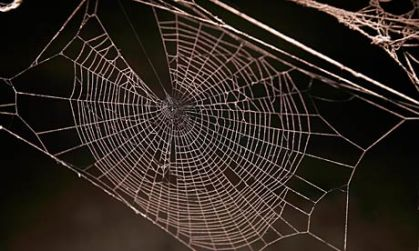 A-spiders-web-007