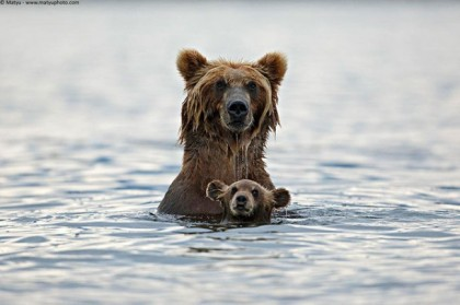 Mom and baby bear