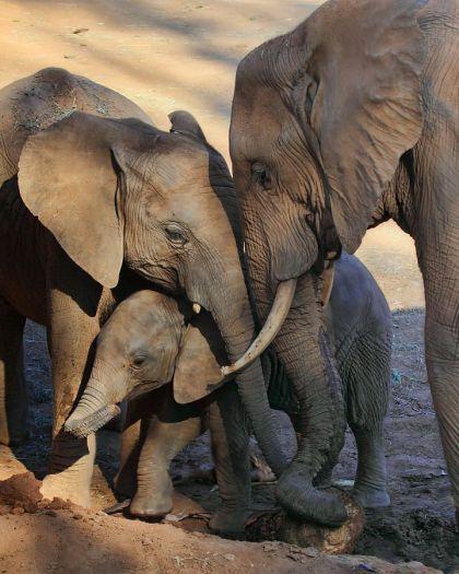 Elephant family3