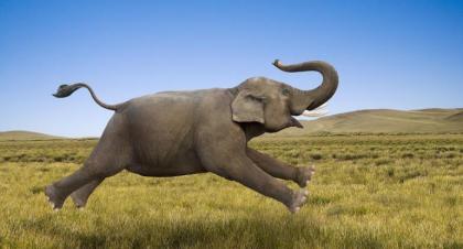 elephant-sized-770x415xt
