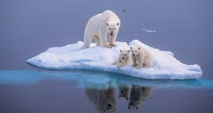 polar-bear-global-_3339474b