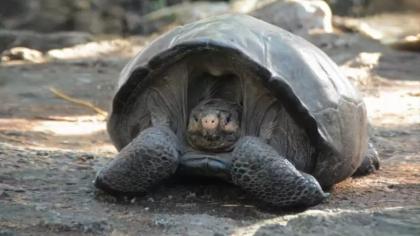 1550771054343-FOTO-DESTACADA-2019-Tortuga-considerada-extinta