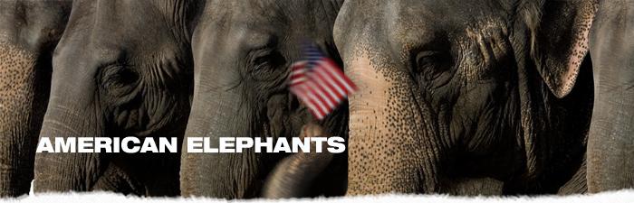 american-elephants-waving-flag.png